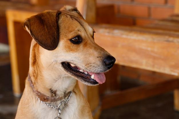 Beautiful mutt dog