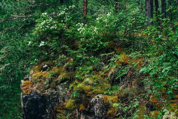 높은 이끼 절벽에 풍부한 식물이있는 아름다운 미스터리 타이가