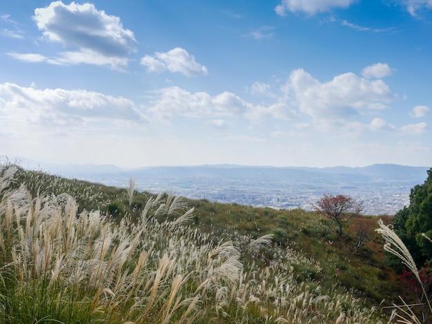 Beautiful nara mountain at nara city, japan. nara park is a famous place landmark to see wild animals deer