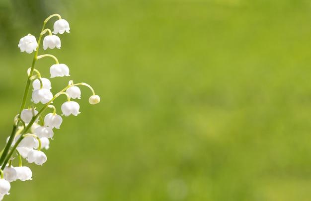 お祝いのテキストの美しい自然の背景。スズランの花の繊細な春のユリ。緑の背景に空き容量。