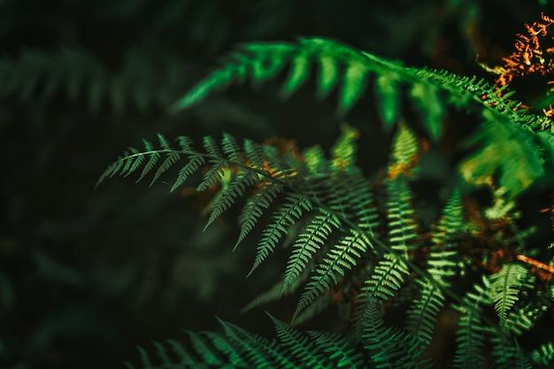 숲에 양치류가 있는 아름다운 자연 배경
