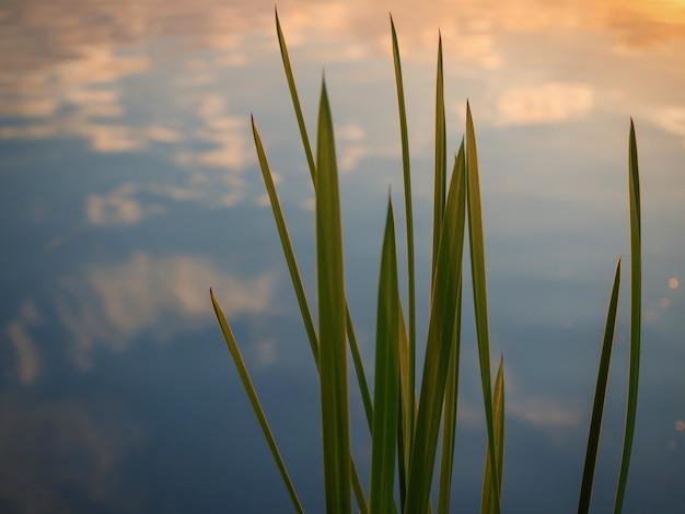 지팡이의 잎과 저녁 태양의 섬광과 함께 아름 다운 자연 배경. 물과의 평화