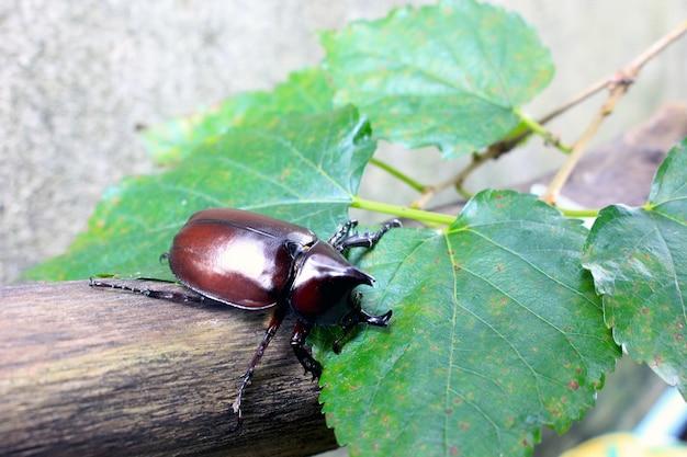 Красивый натуральный жук-жук.
