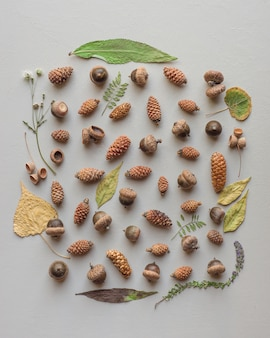Beautiful natural collection of different types of pinecones and acorns with a leafy frame