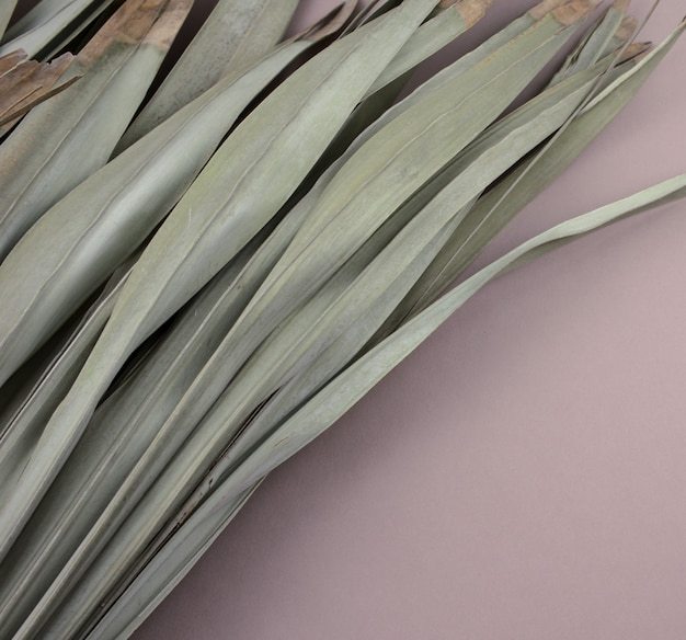 Beautiful natural dry withered palm leaves flat lay on gray purple background