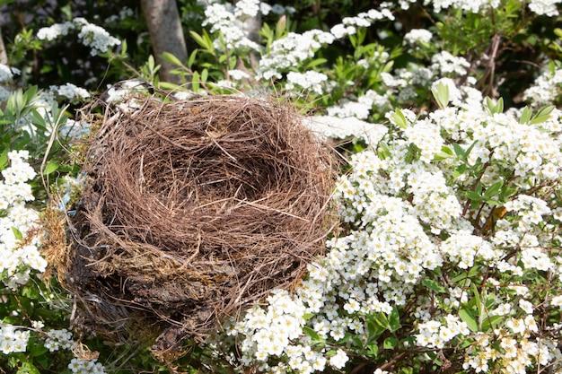 Beautiful natural empty birds nest in flowers cherry tree