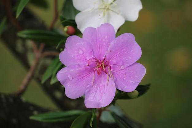 Красивый натуральный цветок