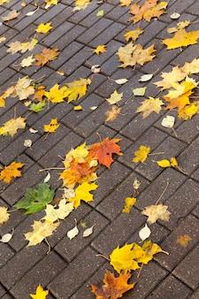 秋の季節に色が変わった美しい自然の葉