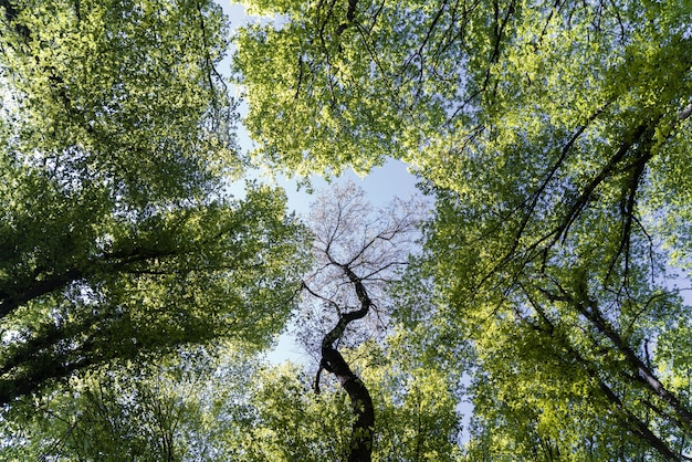 美しい自然の緑の森