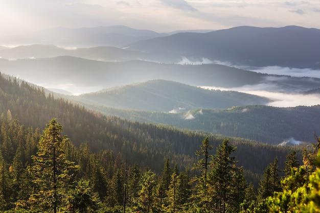 カルパティア山脈の美しい自然の風景