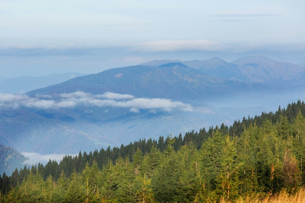 カルパティア山脈の美しい自然の風景 Premium写真