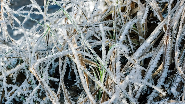 Beautiful natural patterns of frost crystals on the grass, leaves and branches
