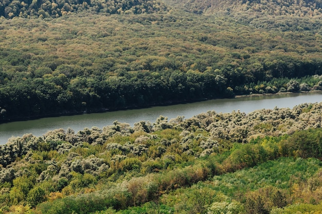 山々を背景に緑の森の川の美しい自然の風景