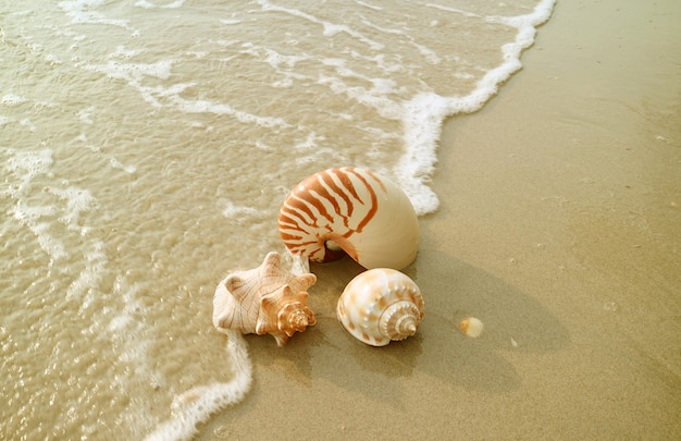 Beautiful natural sea shells isolated on the wet sand beach with backwash