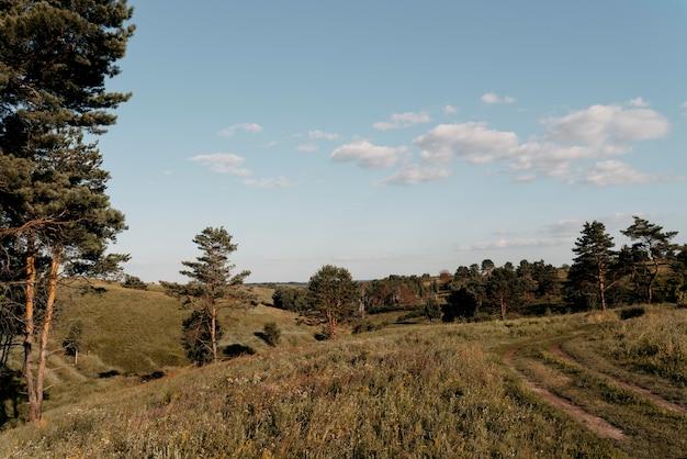 牧草地の美しい自然の景色