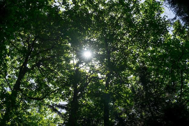 Красивая природа утром в туманном весеннем лесу с солнечными лучами