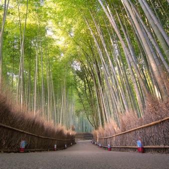 교토, 일본의 아라시야마에서 가을 시즌에 아름다운 자연 대나무 숲.