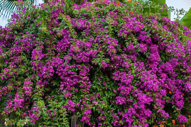 다양한 색상의 아름다운 자연 꽃 벽