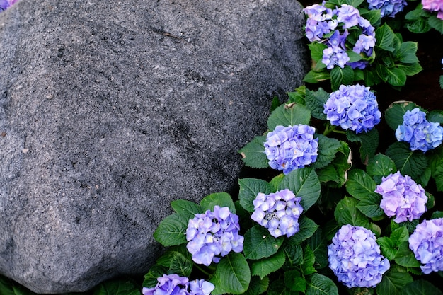 Beautiful nature flower with rock for background.