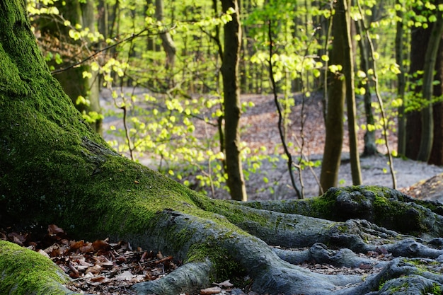 Beautiful nature of a forest on a sunny day