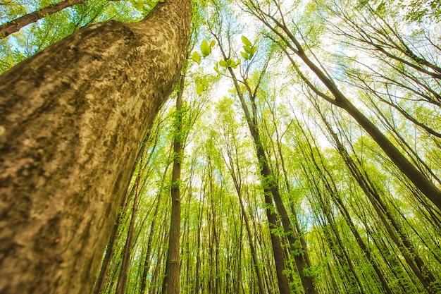 朝の森の美しい自然