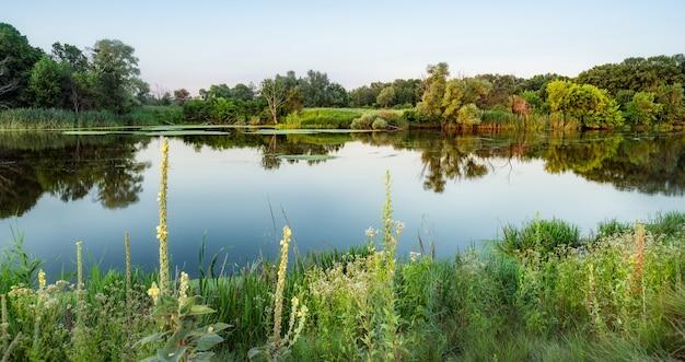 美しい自然の風景、澄んだ青い空、木々、茂み、周りの緑の植物