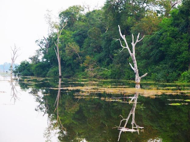 Красивый вид ландшафта природы озера пруд в neak poan в комплексе angkor wat, сием рип, камбоджа.