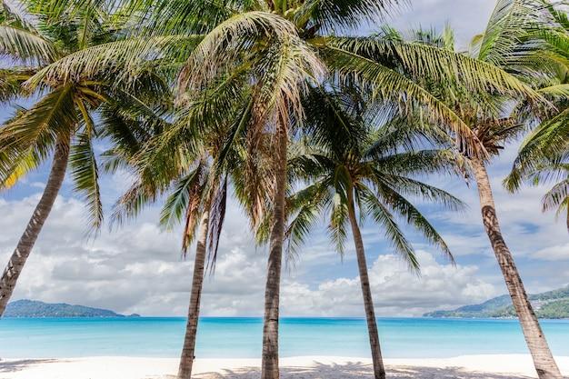 タイ、プーケット島のパトンビーチの朝のアンダマン海と白い砂浜の美しい自然。 Premium写真