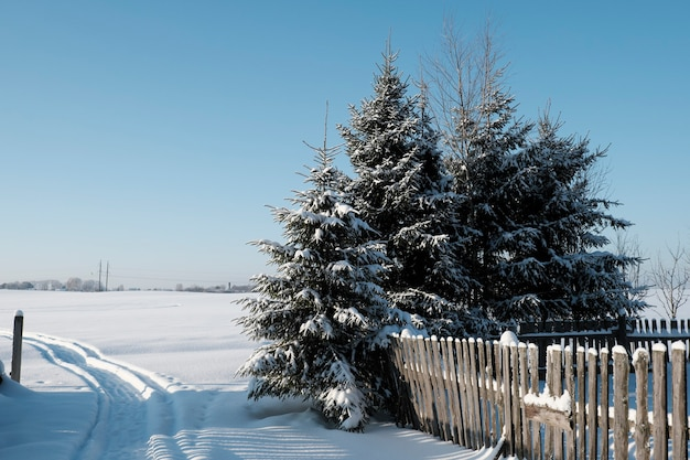 北の美しい自然、凍るような冬の大きな木々のある自然の風景