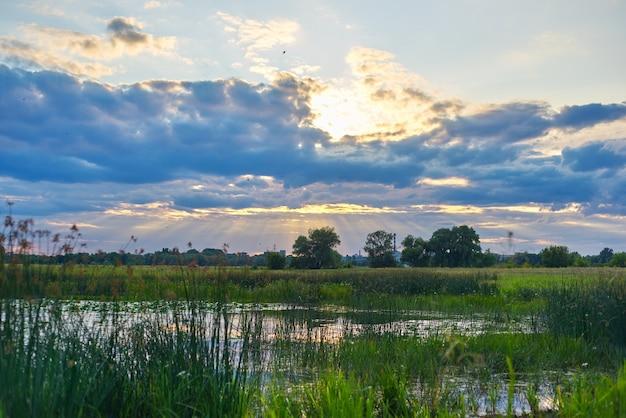 Красивая природа, болотный пруд в зарослях растений, драматическое небо в облаках с солнцем.