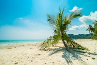美しい自然の熱帯のビーチ
