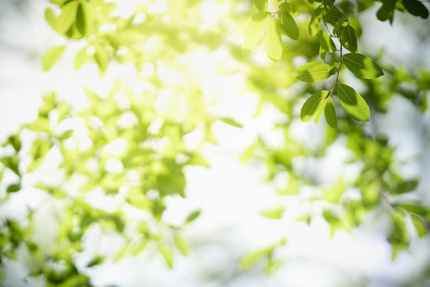 Beautiful nature view green leaf on blurred greenery surface under sunlight with bokeh and copy space