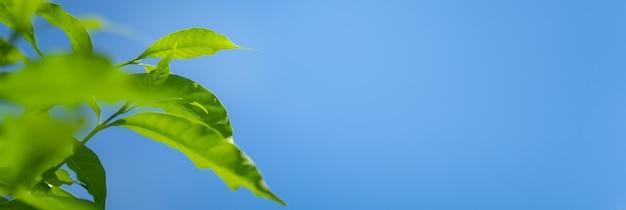 아름다운 자연은 푸른 하늘 배경에 있는 녹색 잎을 배경 자연 식물 풍경, 생태 표지 개념으로 사용하는 복사 공간을 볼 수 있습니다.