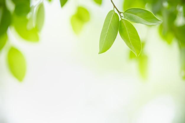 Красивый вид на природу, зеленый лист на размытой зелени и фоне белого неба с копией пространства