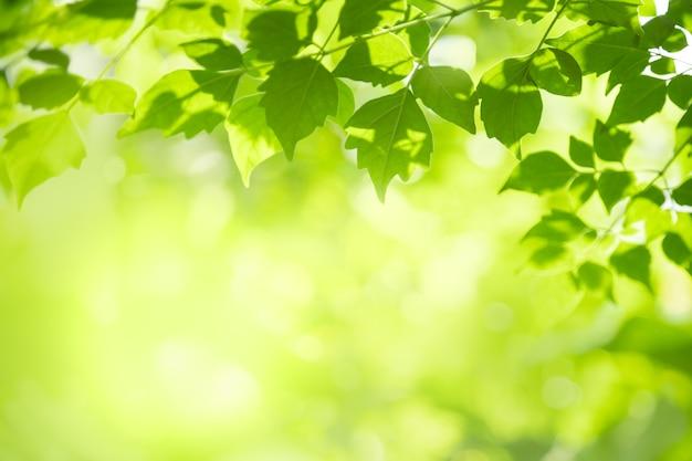 Красивый вид на природу, зеленый лист на размытом фоне зелени под солнечным светом и копией пространства