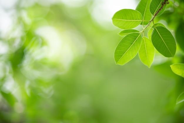 美しい自然は、背景の自然植物の風景、エコロジーの壁紙のコンセプトを使用して、ボケ味とコピースペースで日光の下でぼやけた緑の背景に緑の葉を表示します。