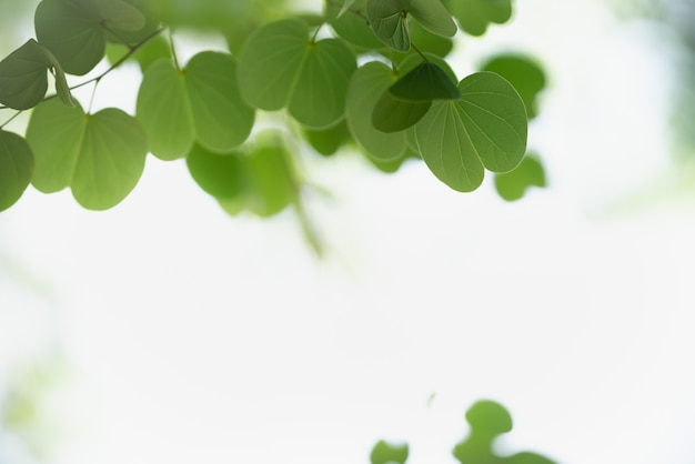Красивый вид на природу зеленый лист на размытом фоне зелени под солнечным светом с боке и копией пространства, используя в качестве фона естественный пейзаж растений, концепцию обоев экологии.