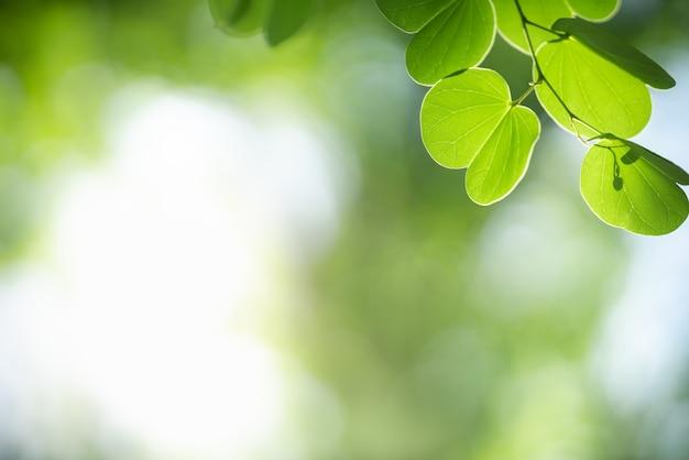아름다운 자연은 햇빛 아래 흐릿한 녹지 배경에 녹색 잎을 보고 배경 천연 식물 풍경, 생태 벽지 개념으로 사용하는 복사 공간을 사용합니다.