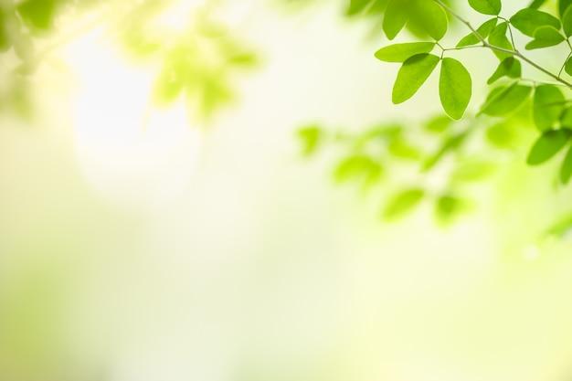 美しい自然は、ボケ味を持つ日光の下でぼやけた緑の背景に緑の葉を表示し、背景として自然の植物の風景、エコロジー壁紙のコンセプトを使用してスペースをコピーします。