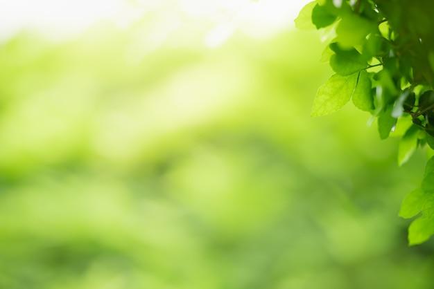 Красивый вид на природу, зеленый лист на размытом фоне зелени под солнечным светом с боке