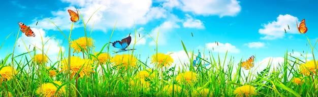 庭のぼやけた背景に蝶の美しい自然の眺め。