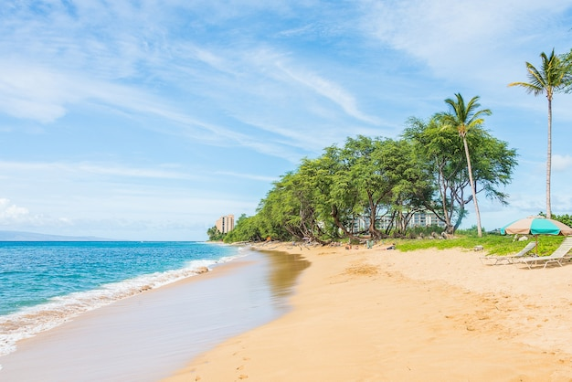 Beautiful nature view with palms and clear blue sky on a tropical paradise island