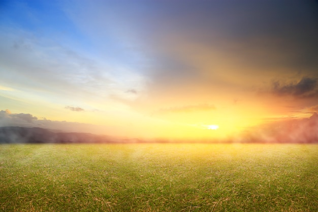 Beautiful nature with fresh grass and morning sunrise