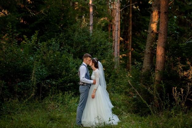 Beautiful newlyweds couple walking in the forest. honeymooners. bride and groom holding hand in pine forest, photo for valentine's day