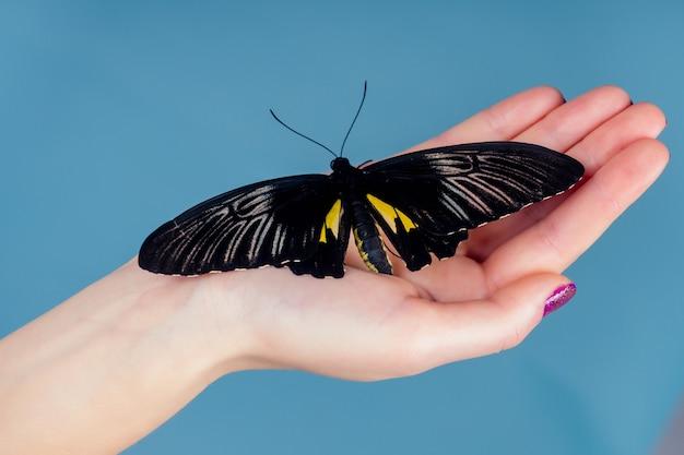 Красивая обнаженная женщина на синем фоне. девушка и красивая бабочка