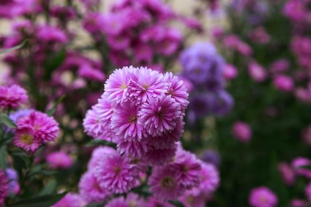 ベンジャマスの花の背景の美しい