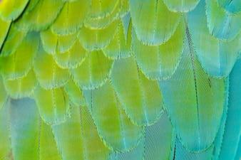 Beautiful of bird feather