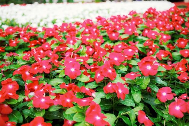 庭の赤い花の美しい