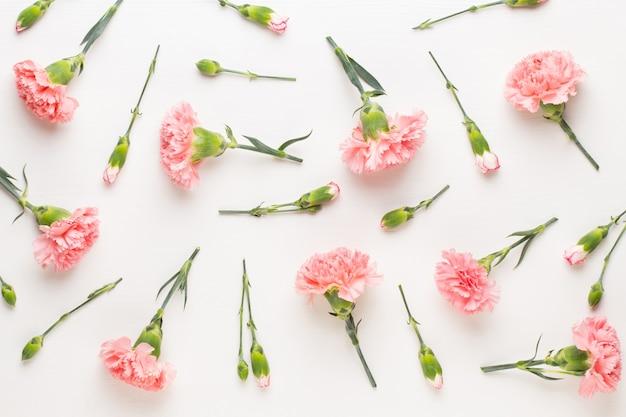 아름 다운 oink 카네이션 꽃 절연