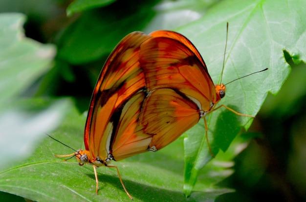 Beautiful orange butterfly on a green leaf